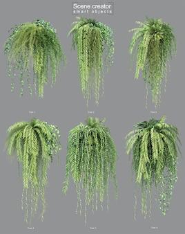 Rendering 3d di piante pensili