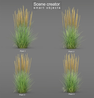 Rendering 3d di karl foerster feather reed grass