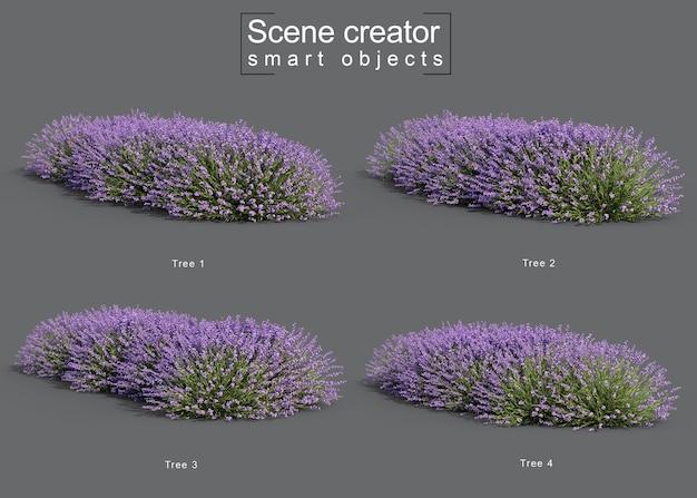 Rendering 3d del creatore di scene di albero di lavanda
