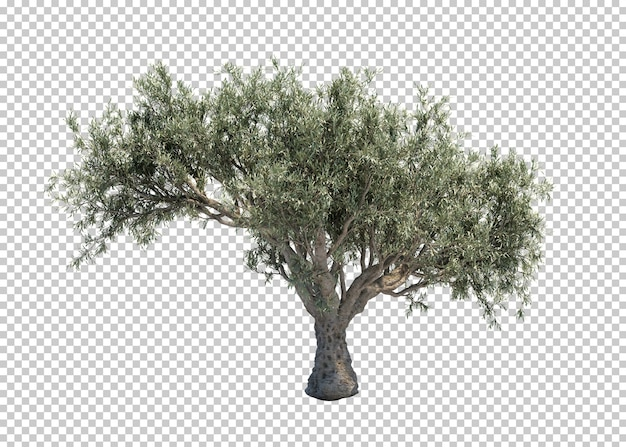 Rappresentazione 3d di di olivo