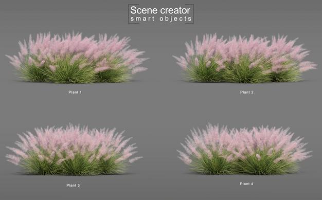 Rendering 3d di pink flamingo muhly grass