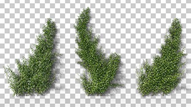 Rappresentazione 3d del gelsomino di stella