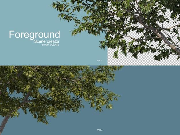 Rendering 3d di alberi foregroung isolati Psd Premium