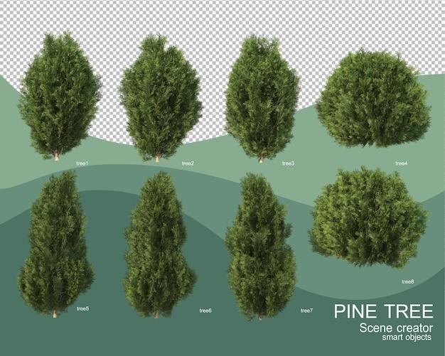 Rendering 3d di varie disposizioni di pino