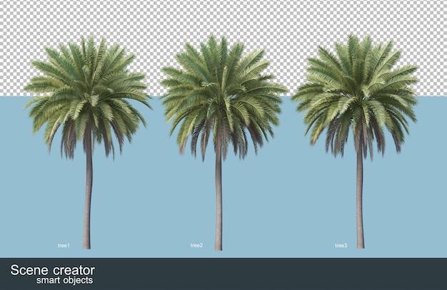 Rendering 3d di varie specie di alberi