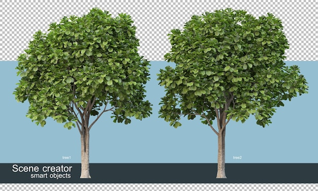 Rendering 3d di varie forme e tipi di alberi