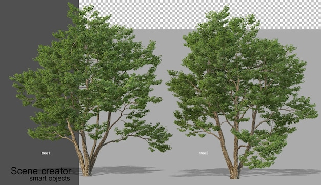 Rendering 3d di vari tipi di alberi isolati