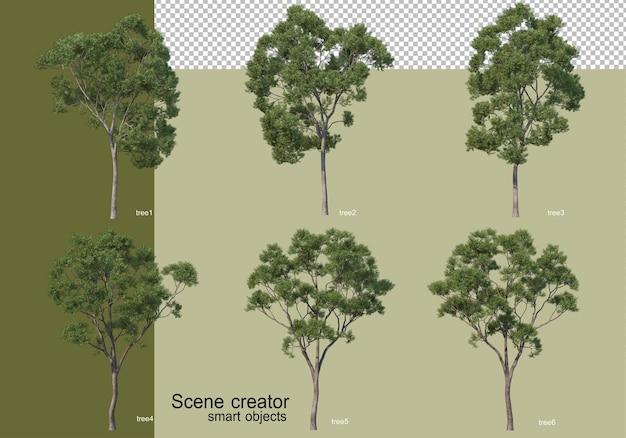 Rendering 3d di vari alberi isolati