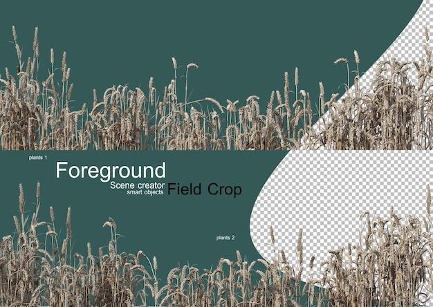 Rendering 3d di vari tipi di agronomia