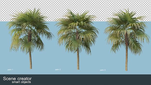 Rendering 3d di vari tipi di palme