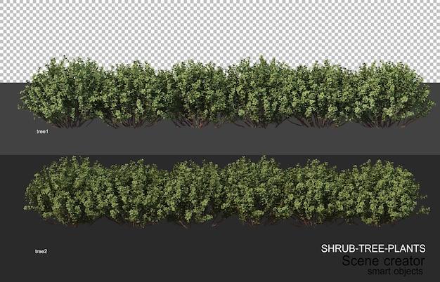 Rendering 3d di vari tipi di layout di arbusti