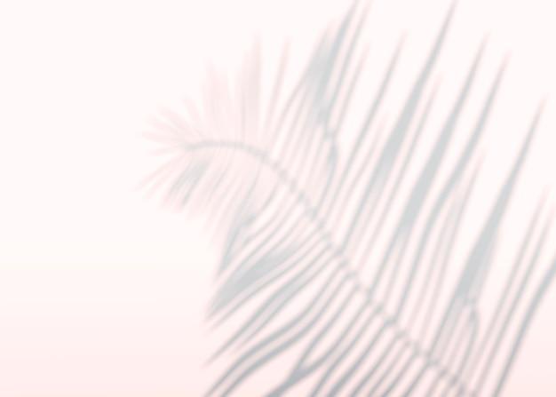 Fondo astratto delle foglie di palma delle ombre su una parete. rendering 3d.