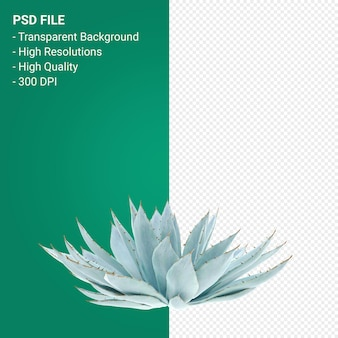 Agave parryi 3d render isolato