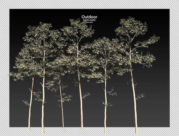 Percorso di ritaglio albero isolato albero alnus cremastogyne