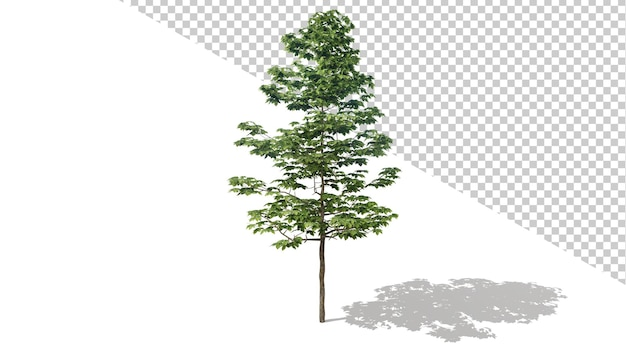 Sicomoro americano con albero isolato 3d render