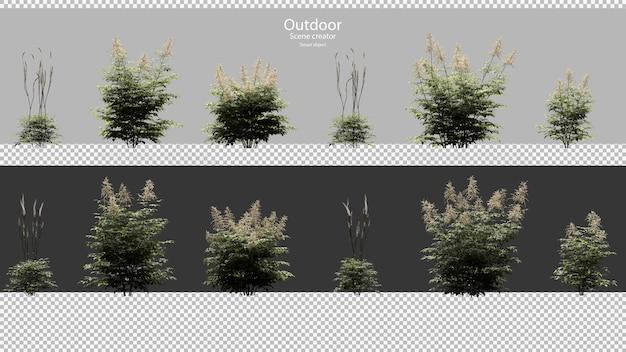 Astilbe set di piante bianche