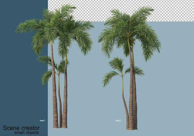 Bella rappresentazione 3d di alberi isolati