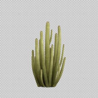 Bella pianta nel rendering 3d isolato