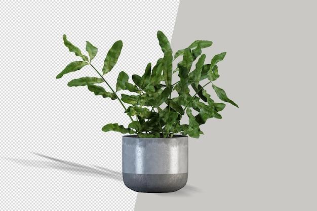 Bella rappresentazione 3d della pianta isolata