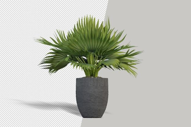 Bella pianta in vaso rendering 3d