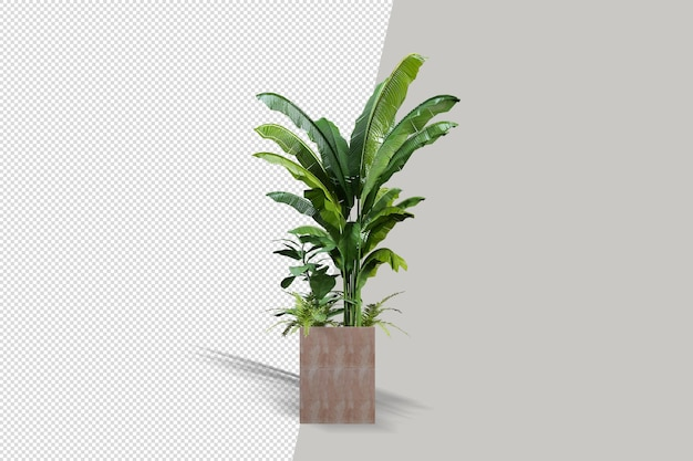 Bella pianta in vaso nella rappresentazione 3d isolata