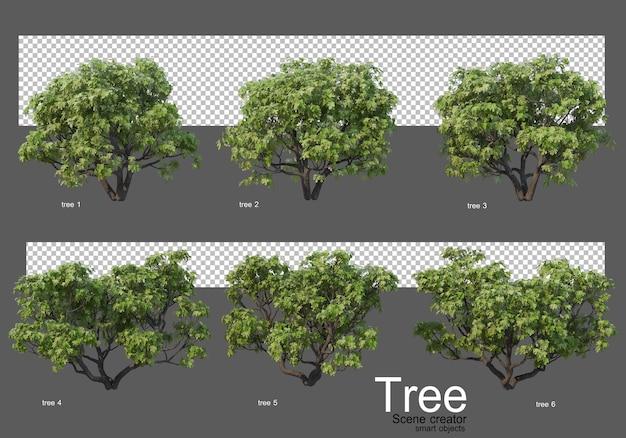Bella varietà di rendering di grandi alberi