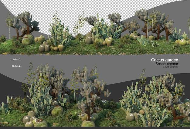 Bella varietà di giardino di cactus