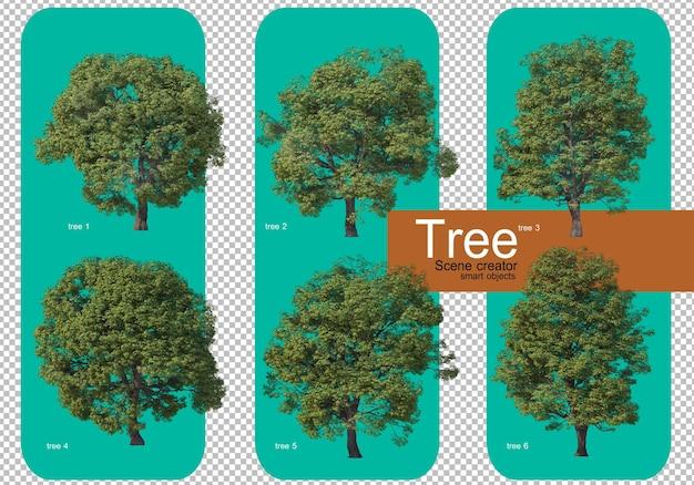 Bella varietà di grandi composizioni arboree