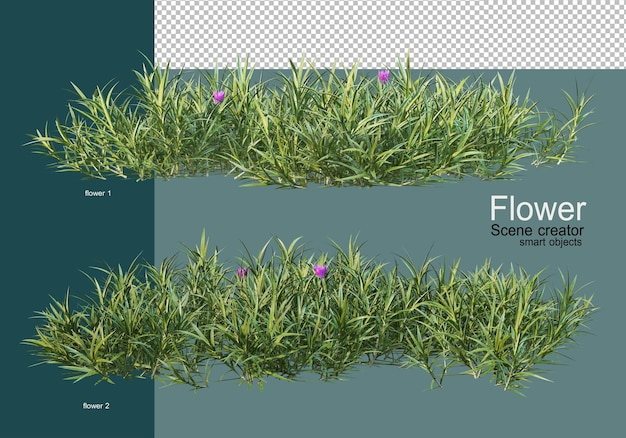 Bellissimi vari tipi di fiori