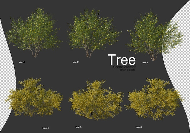 Bellissimi vari tipi di alberi isolati