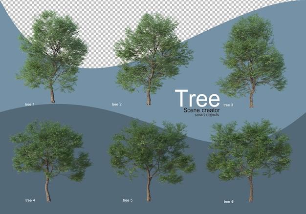 Bellissimi vari tipi di alberi