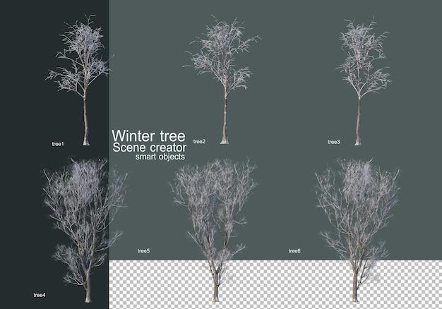 Bellissimi vari alberi invernali isolati