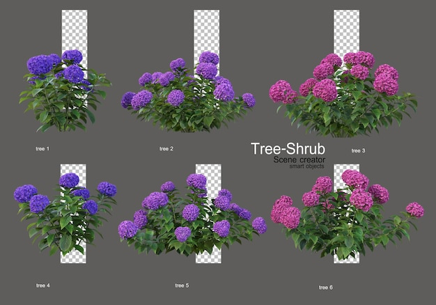 Cespugli e fiori di vario tipo e forma