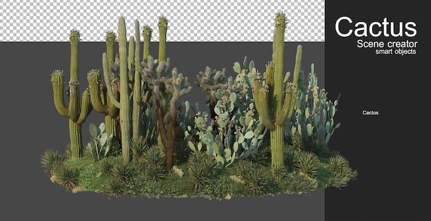 Giardino di cactus piccola varietà