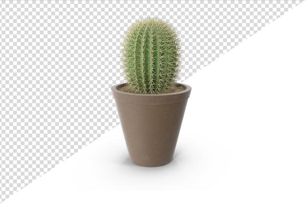 Pianta di cactus isolata