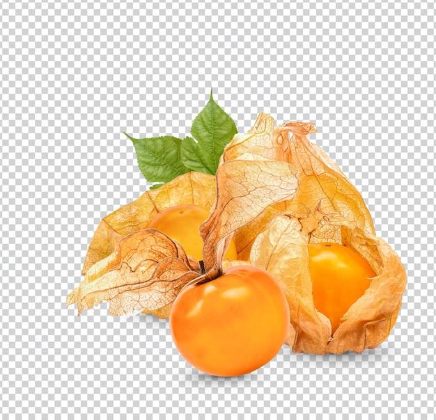 Uva spina del capo, physalis con foglie isolate psd premium