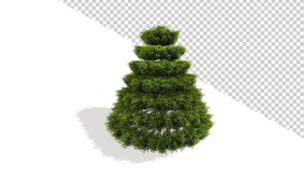 Albero di natale di ginepro cinese con albero isolato 3d render