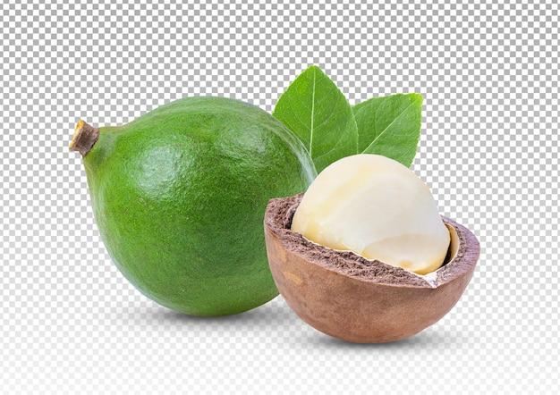 Primo piano su noci di macadamia con foglie isolate