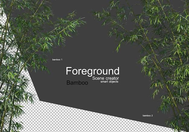 Vista ravvicinata di bellissimi alberi di bambù