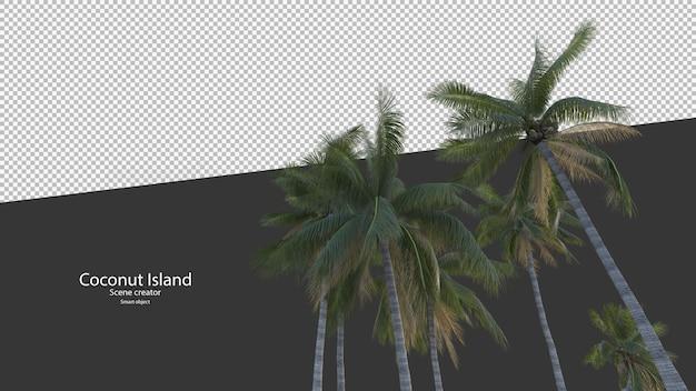 Albero di cocco nel rendering 3d isolato