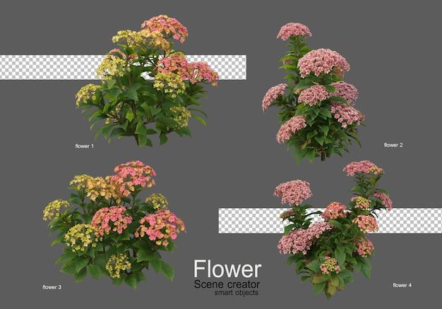I colori dei vari tipi di fiori