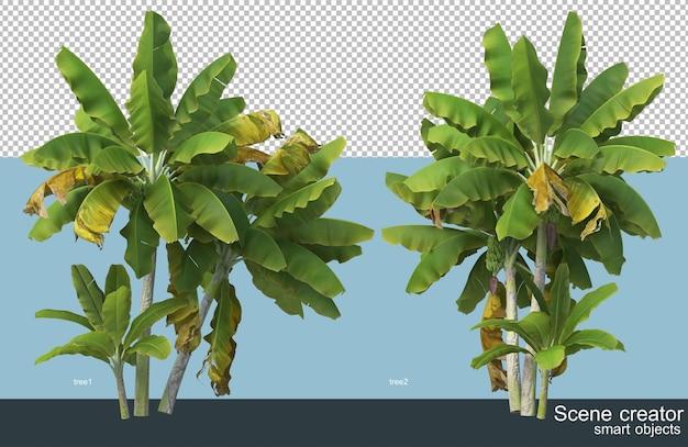 Diversi tipi di banana tree rendering 3d