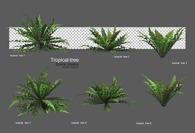 Diversi tipi di alberi tropicali