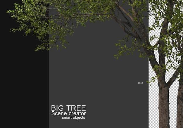 Visualizza un rendering in primo piano di un albero di grandi dimensioni Psd Premium