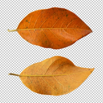 Foglie secche in autunno isolate