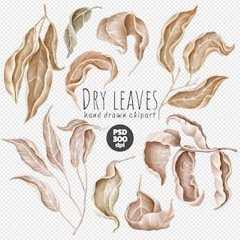 Raccolta di clipart psd di foglie secche