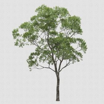 Albero di eucalipto