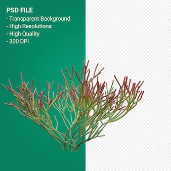 Euphorbia tirucalli 3d render isolato su sfondo trasparente