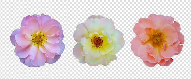 Oggetto fiore con sfondo trasparente psd