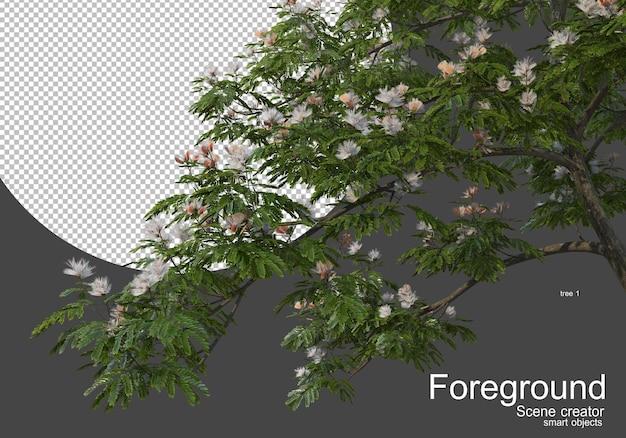 Alberi in fiore davanti alla telecamera